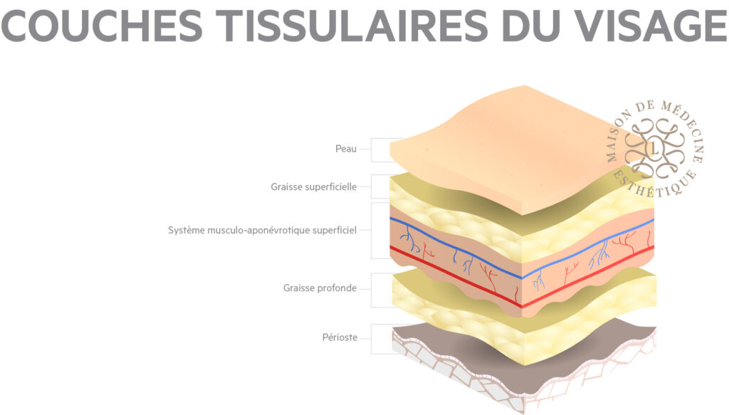 couches tissulaires visage